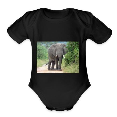 464640587 - Organic Short Sleeve Baby Bodysuit
