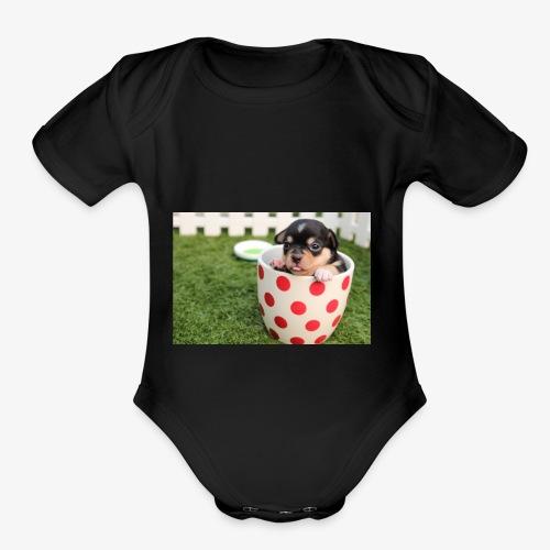 chihuahua dog - Organic Short Sleeve Baby Bodysuit