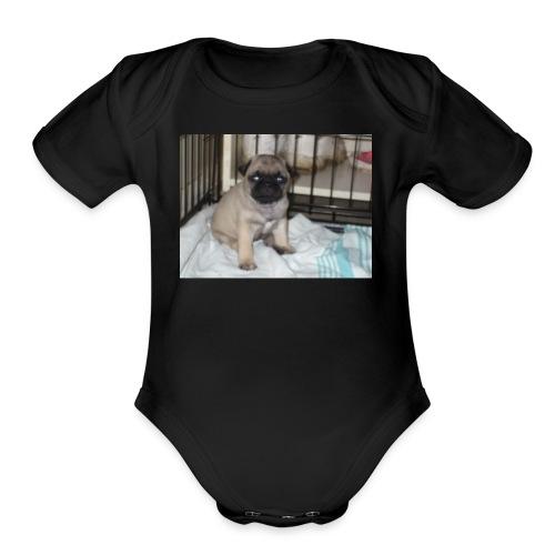Kibbles - Organic Short Sleeve Baby Bodysuit