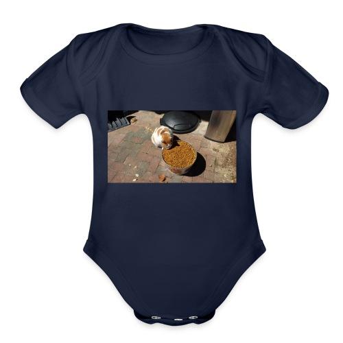 Hungry cat - Organic Short Sleeve Baby Bodysuit